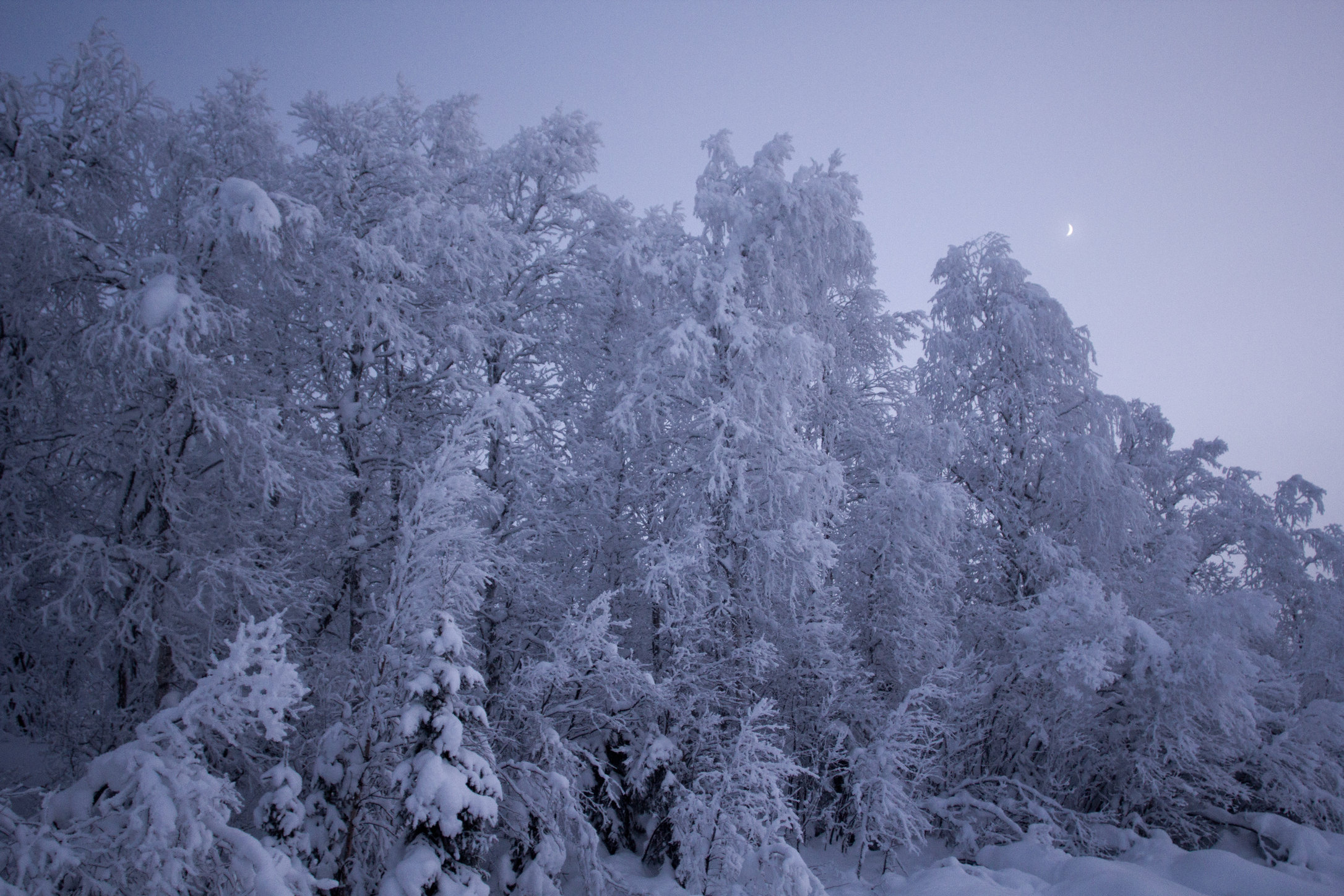 Snow trees_8402804990_o.jpg