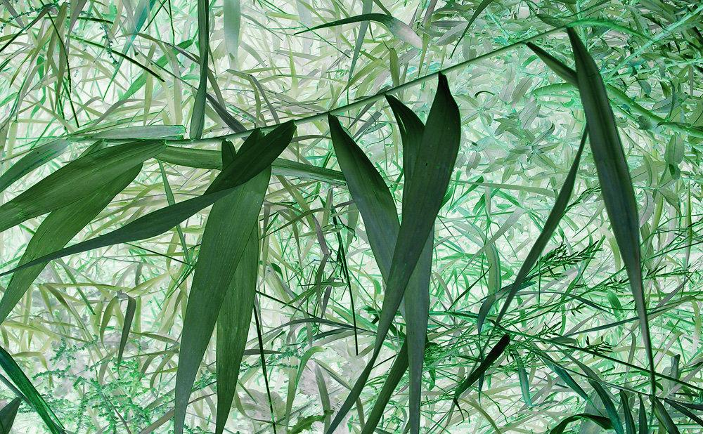Co piszczy w trawie, vigrafia 121, 77x57