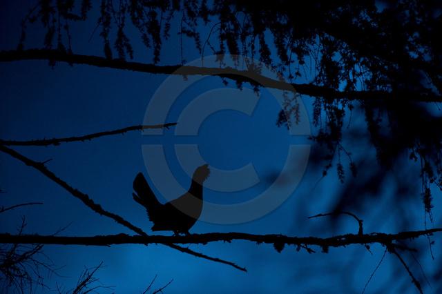 Tiere-Vögel-9.jpg