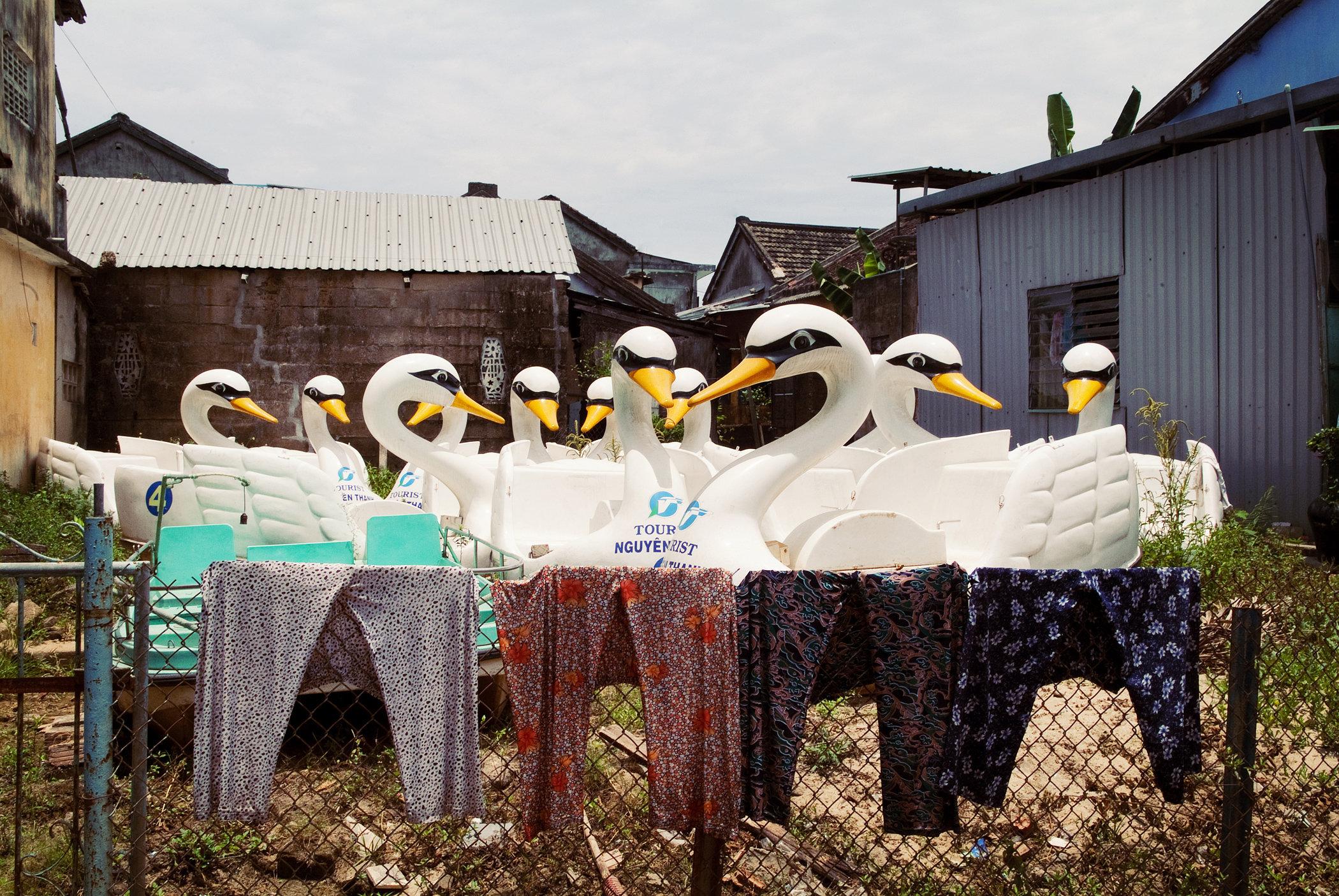 Swans Wait