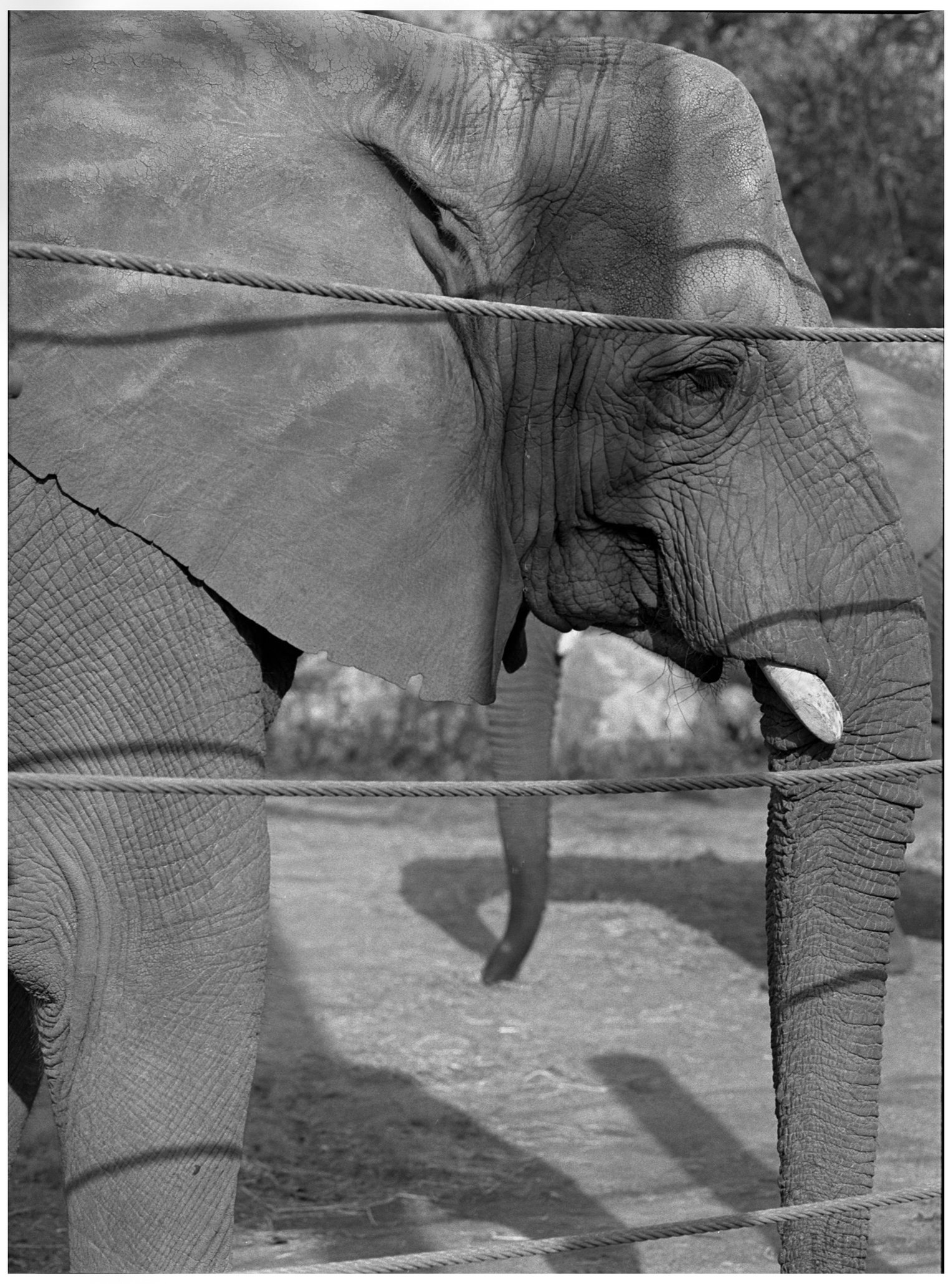 #8  Elephant Forms Series