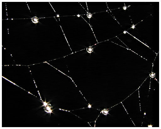 spinneweb-avond-2.gif