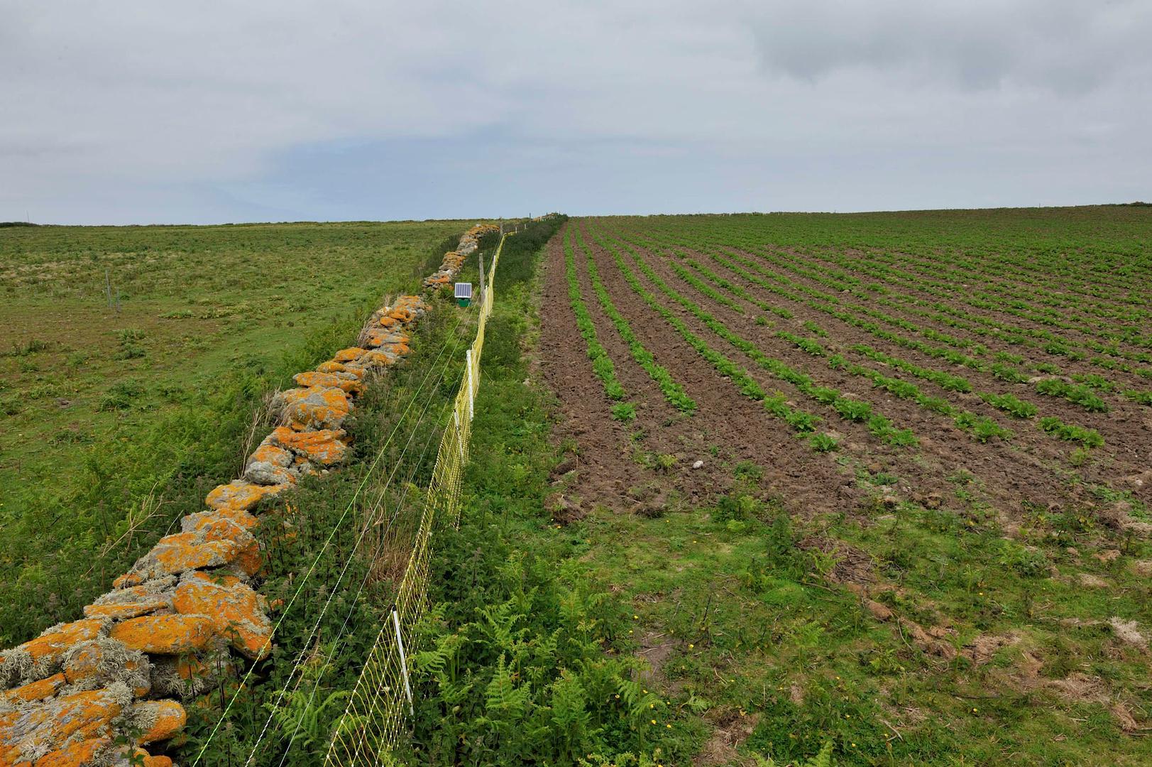 Les champs de pommes de terre de Quéménés.