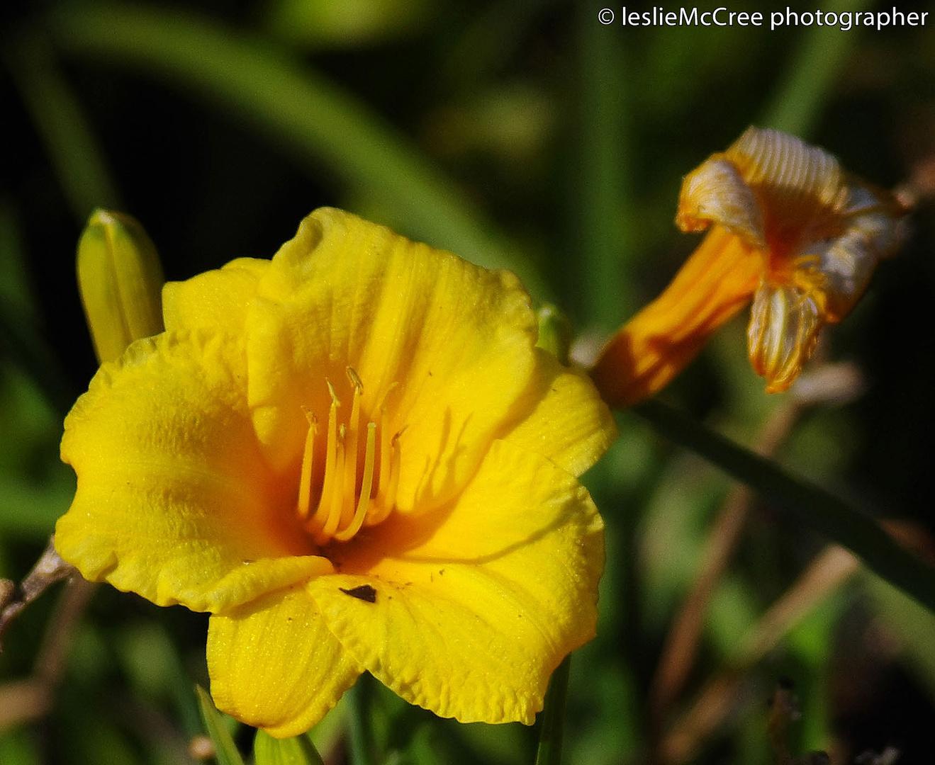 flower4landscape1.jpg
