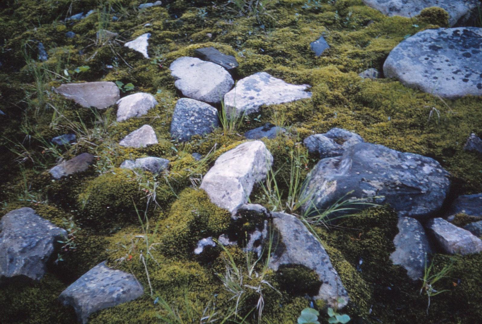 1105 (31) Grote hoekige stenen tussen mos