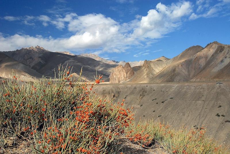 Ladakh_21.jpg