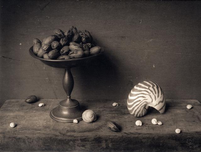 Pecans & Shells,c  2003