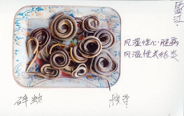 碎蛇   (Sui She)