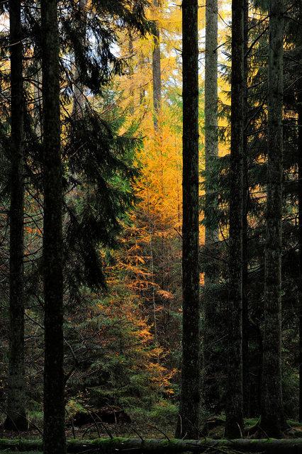 Ardennes 8