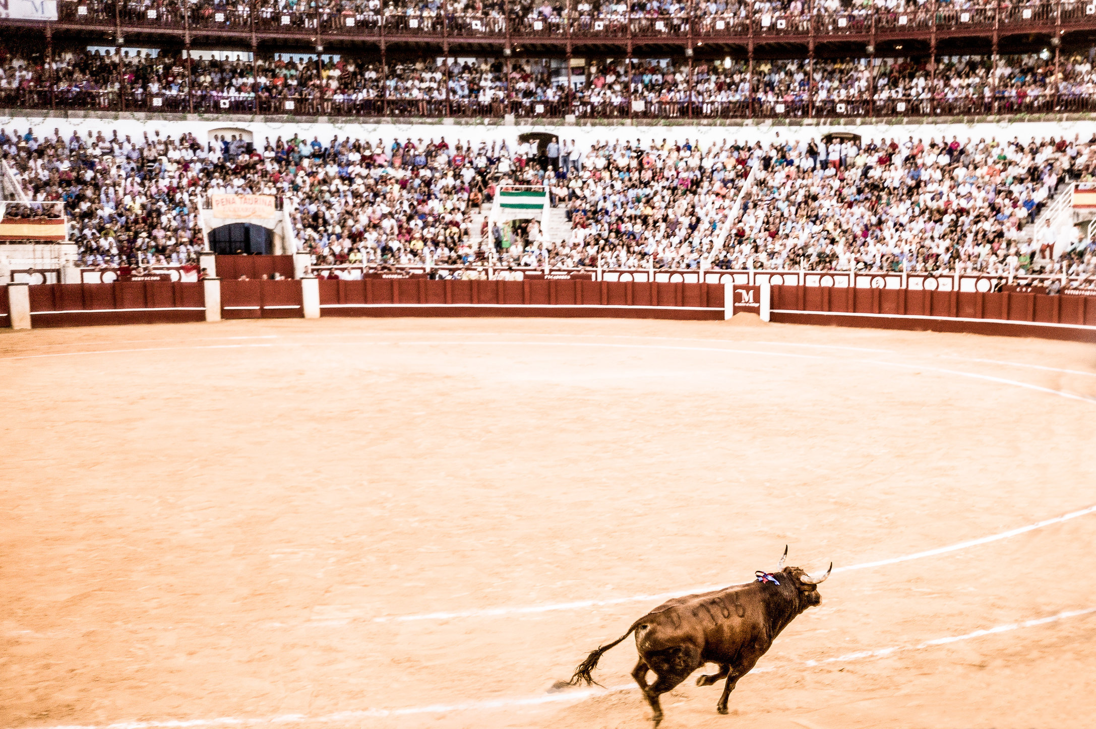The Bullfight-186-bewerkt.jpg