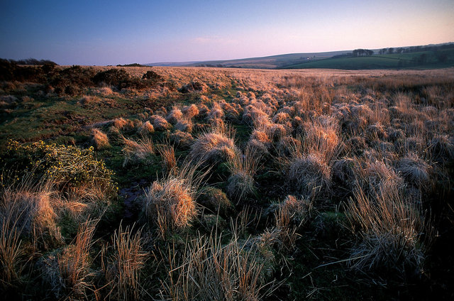 Landes du Dartmoor, Devon, Angleterre