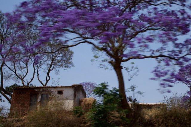 Malawi_079.jpg