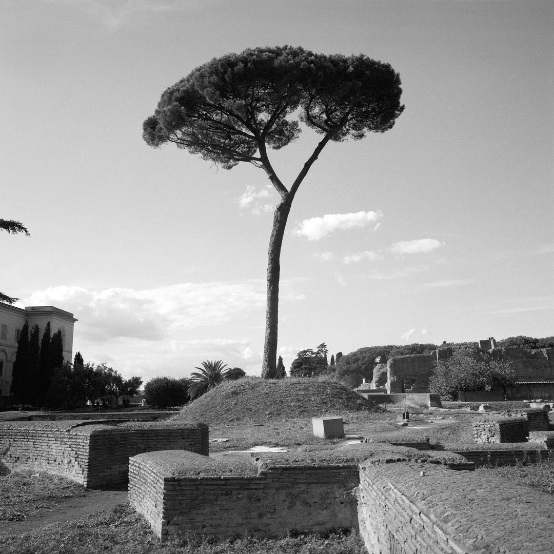 23_Rome Tree V1_1.jpg