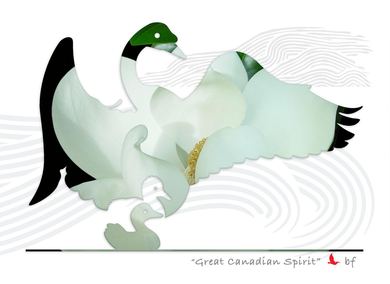 swan-03_1.jpg