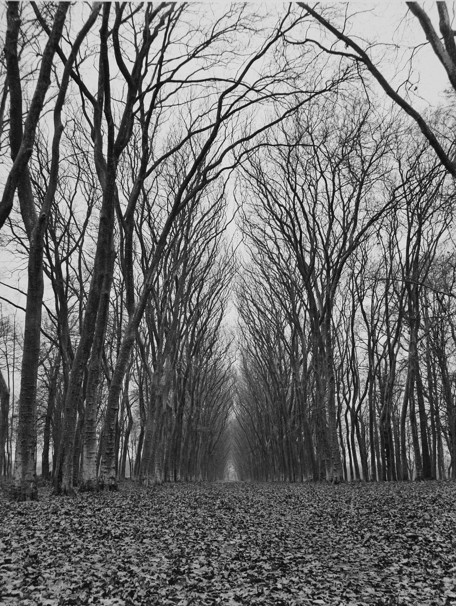 Trees  08.jpg
