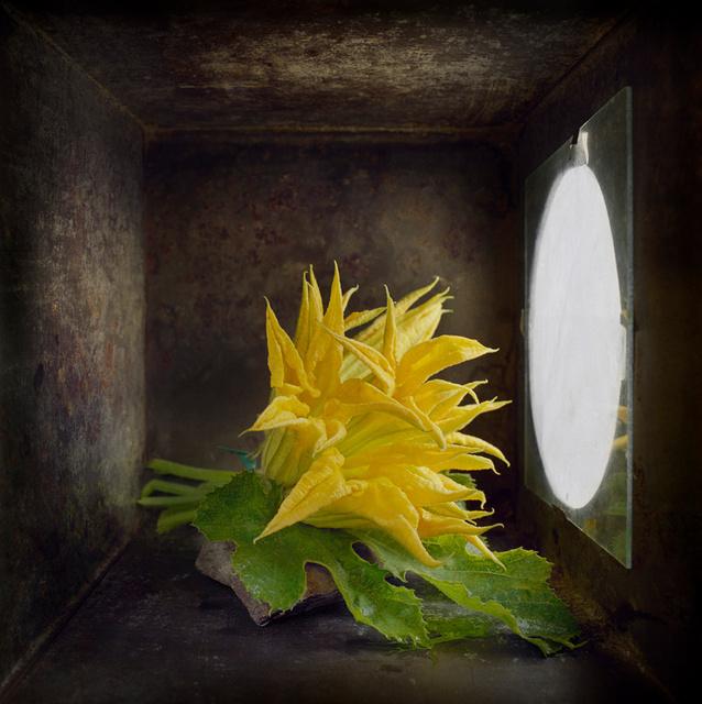 Zucchini Flowers, c 2000