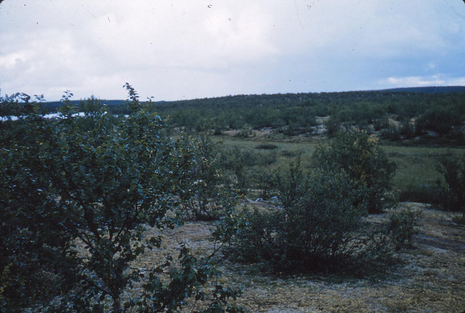 1065 (29) Landsschap met kleine berken, Z. van Oskal