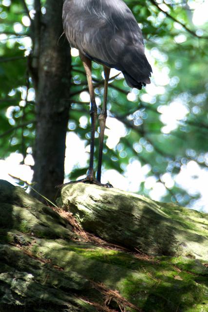 Heron Legs, Natick, MA