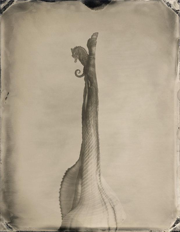 Hippocampus #16