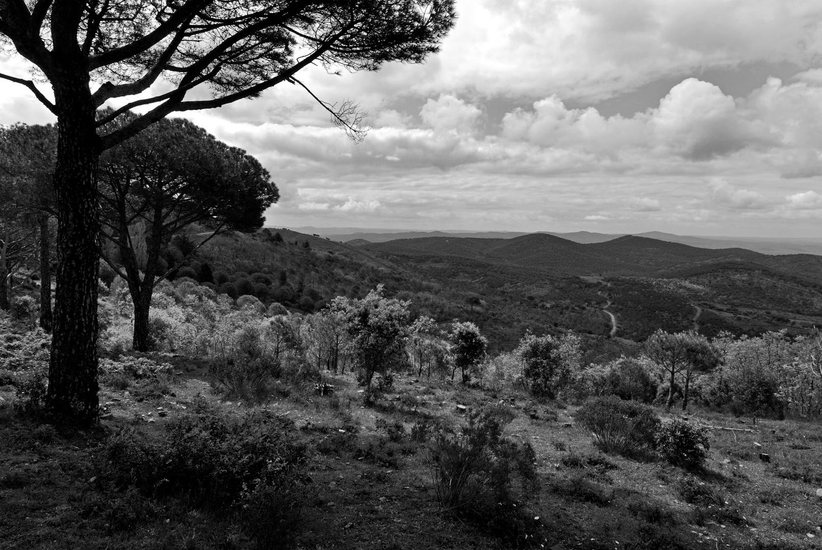 Paysage d'Estremadure près de Monesterio