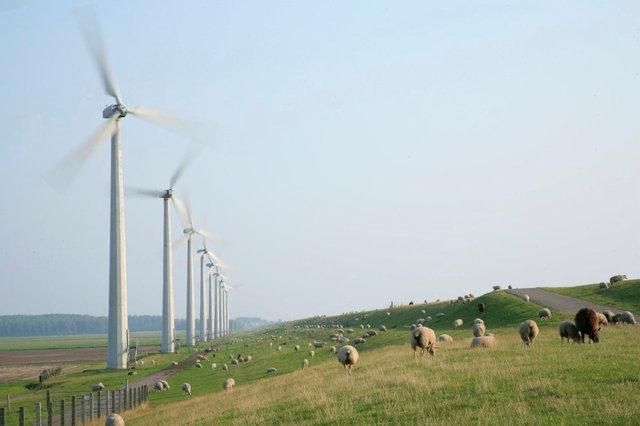 dijk schapen en windmolens