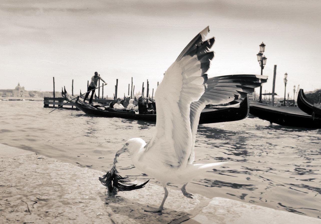 YD_(Venice)_0005.JPG