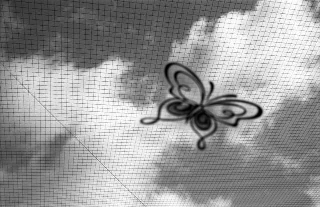 butfly.jpg