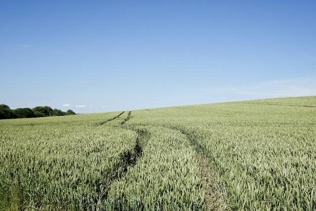 Field near Lipwell Hill
