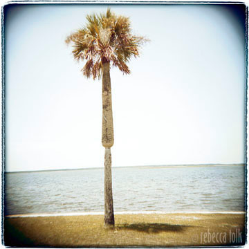 02-08-19-01 Palm Tree.jpg