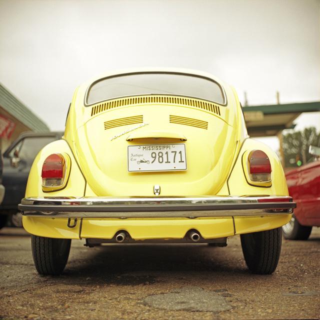 01_Yellow Beetle