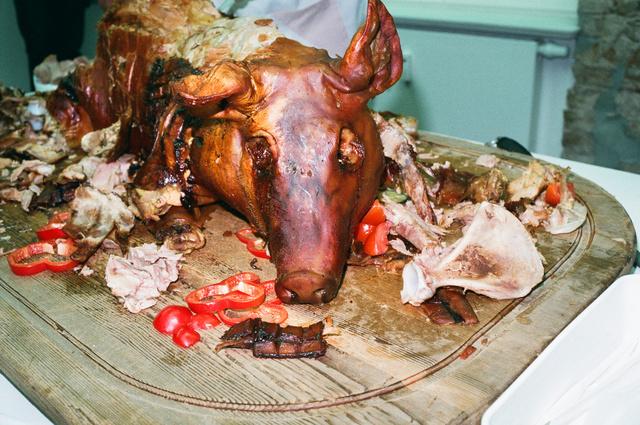 pig, in the eyes.jpg