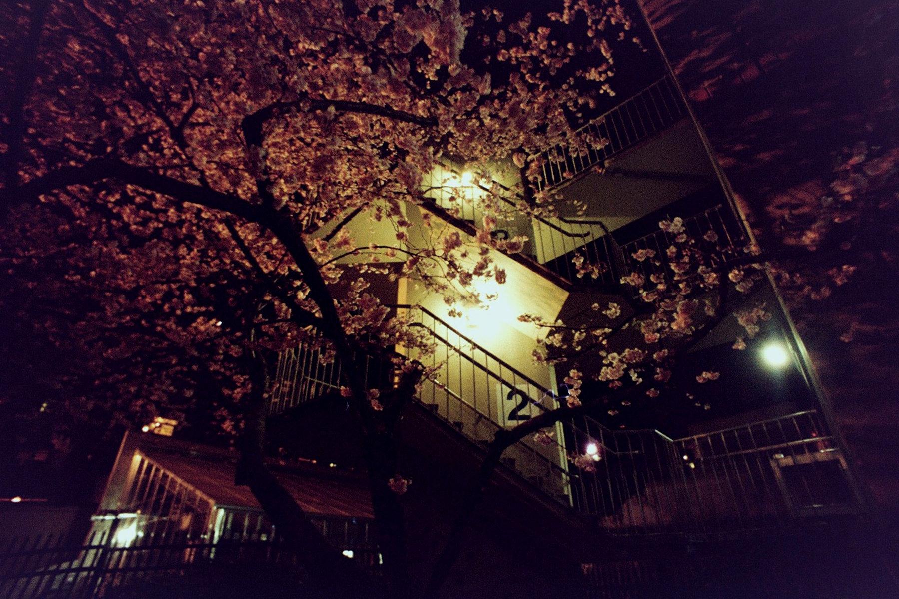 flower garage.jpg