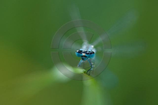 Insekten_Copyright_524.jpg