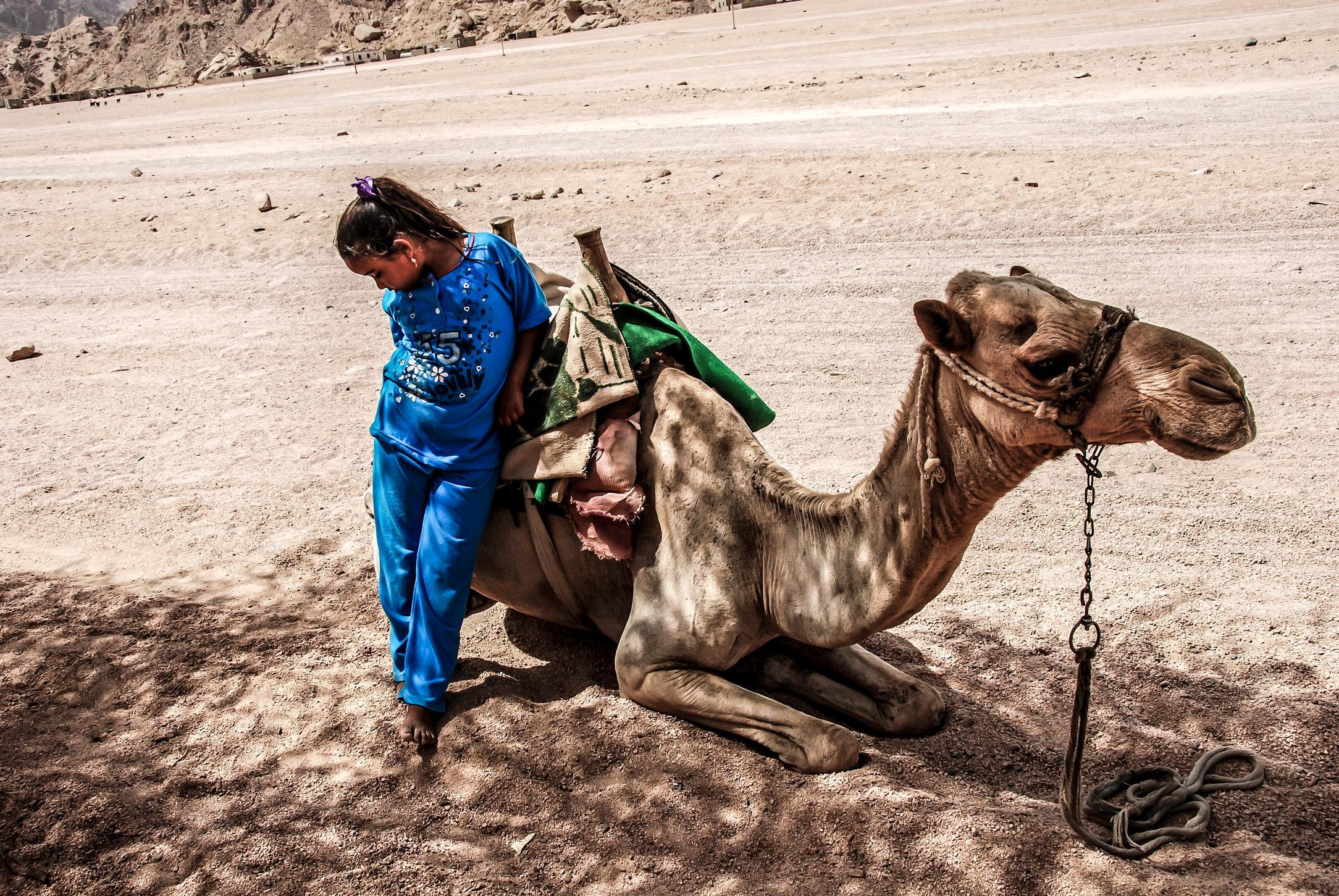 Bedhu Girl & Camel.jpg