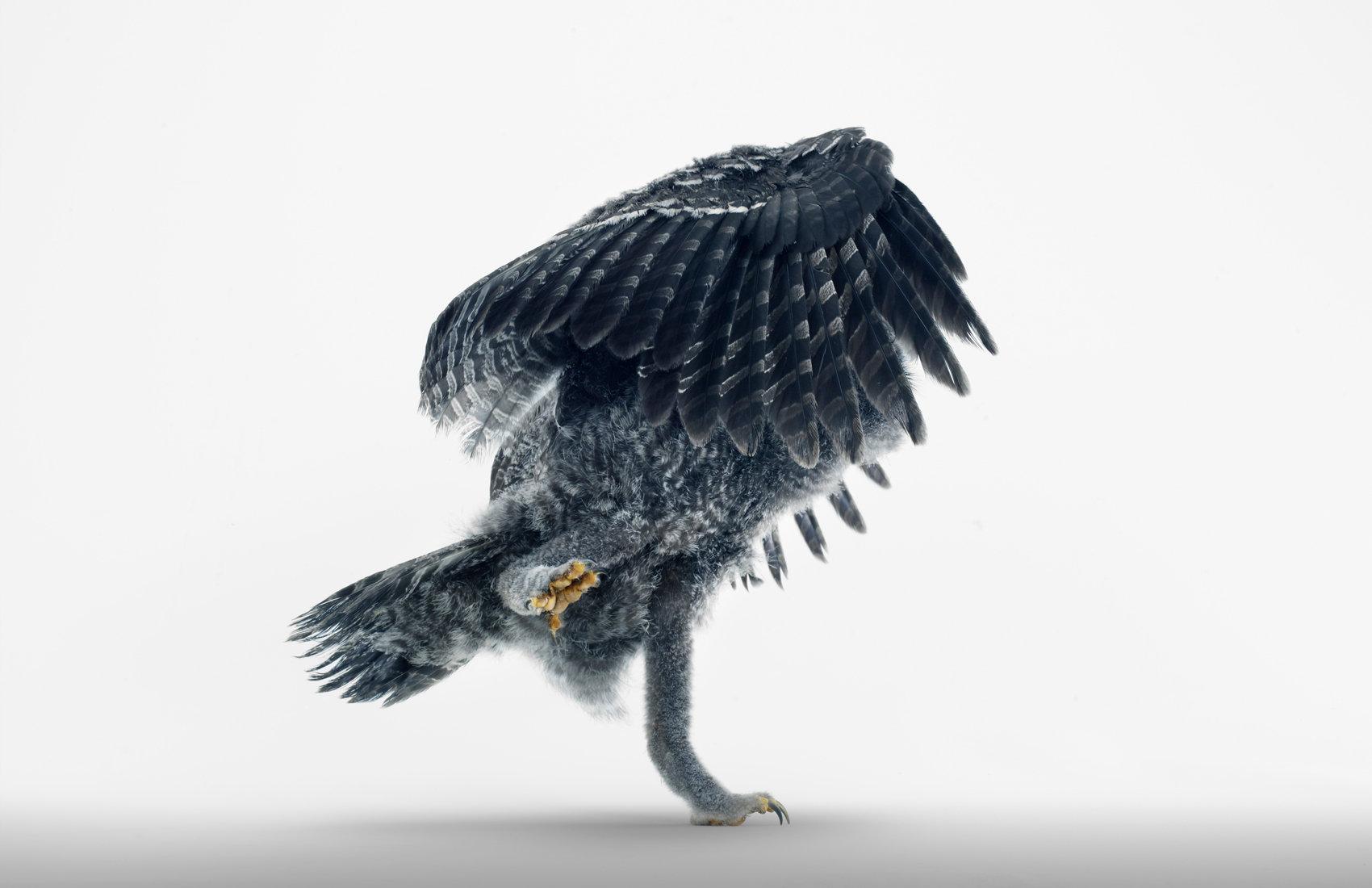 18_3764-OWL 001414 V1.jpg