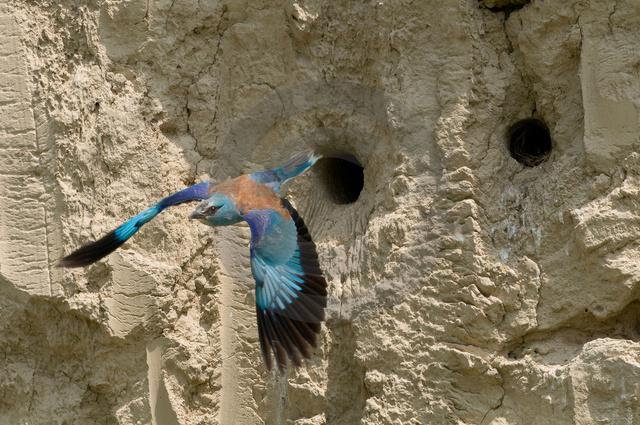 Tiere-Vögel-41.jpg