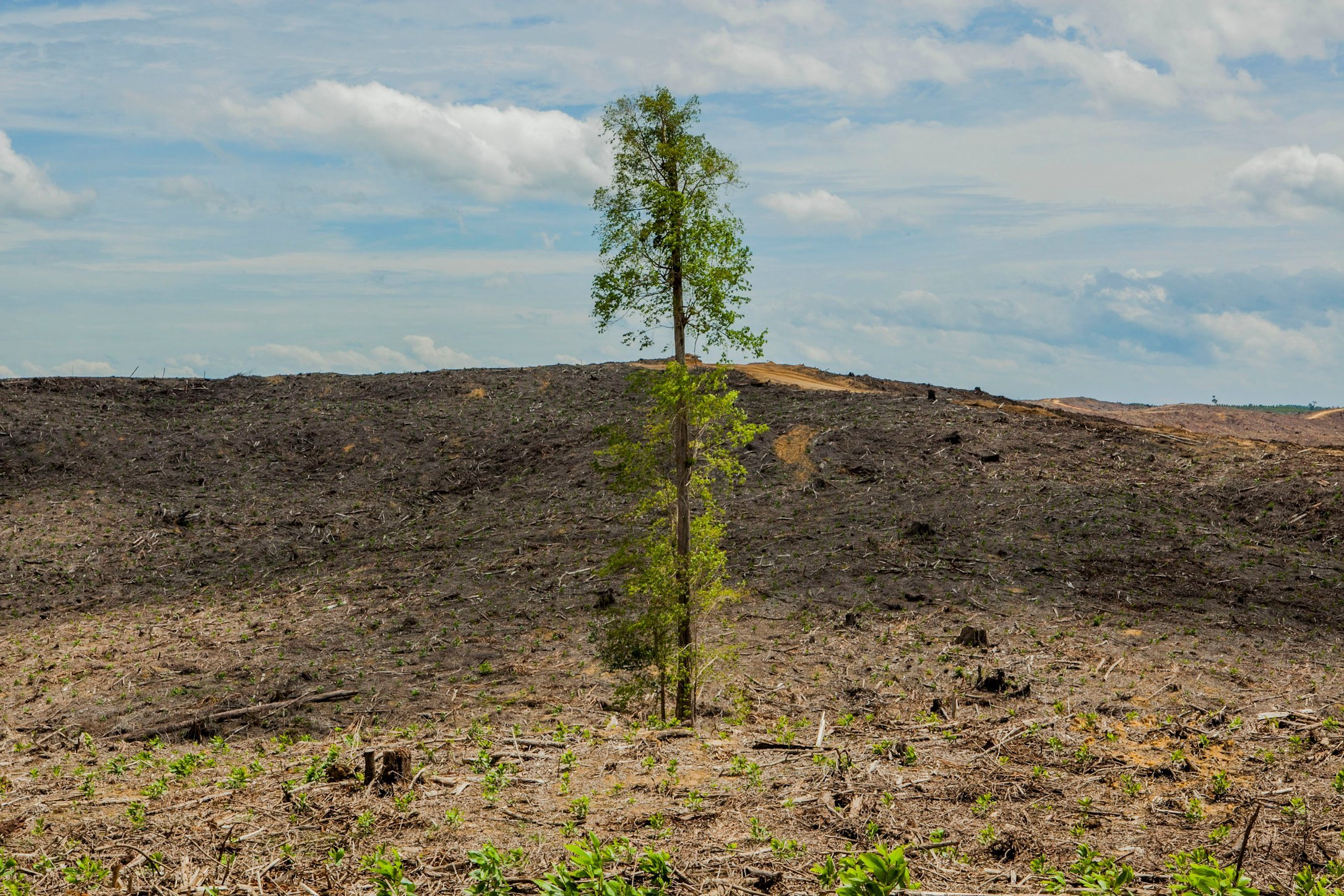 stop deforestation -deforestation- deforestation is becoming increasingly distressing the accelerating destruction of rainforests is now being recognised.