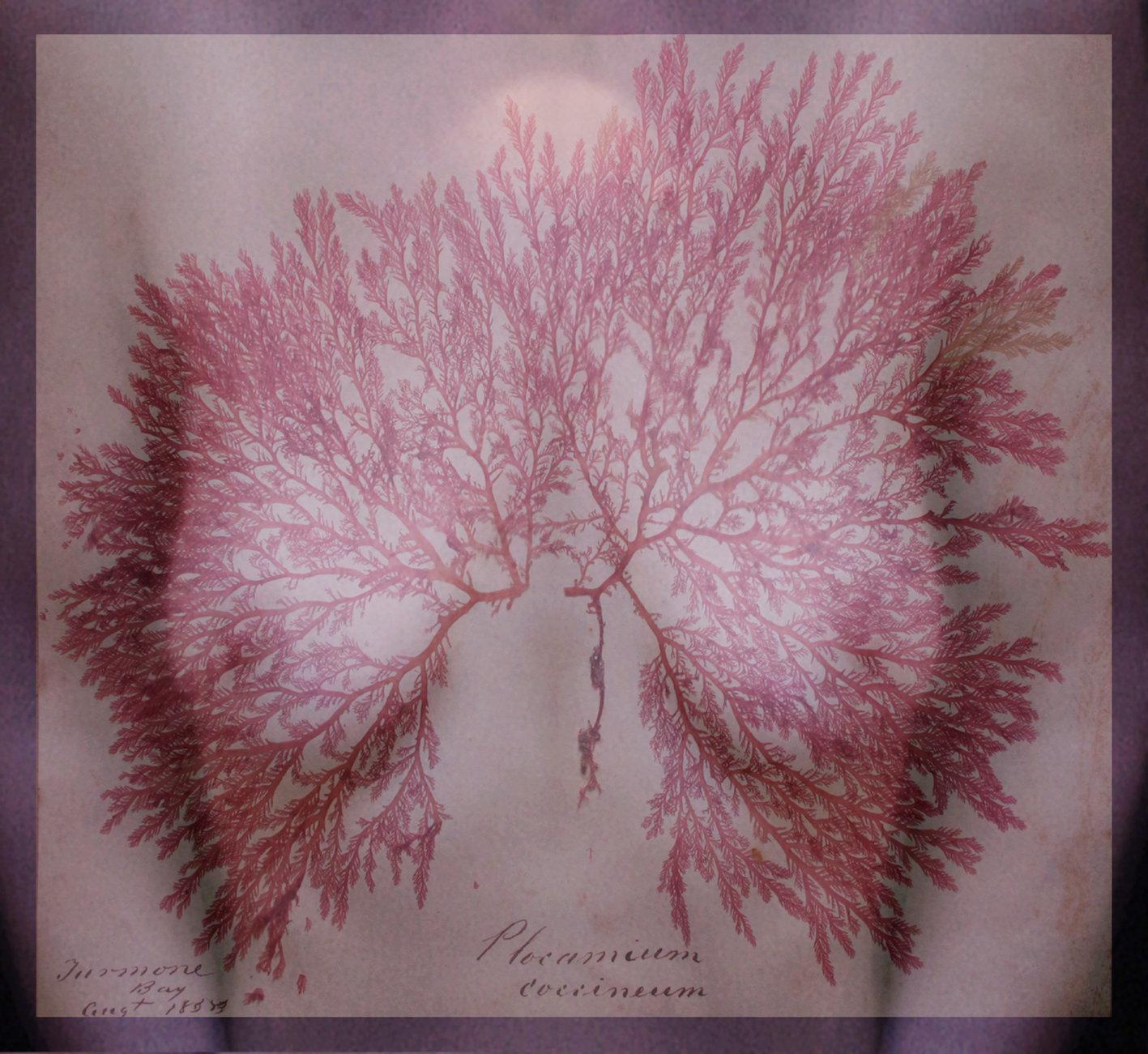 Jenny Pollak - Bloodlines 3.jpg