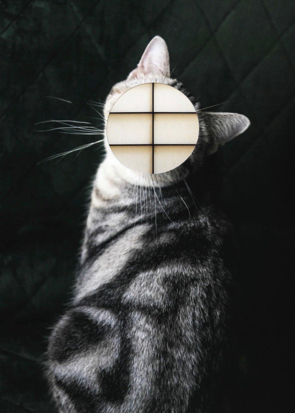 img cat 5005.jpg