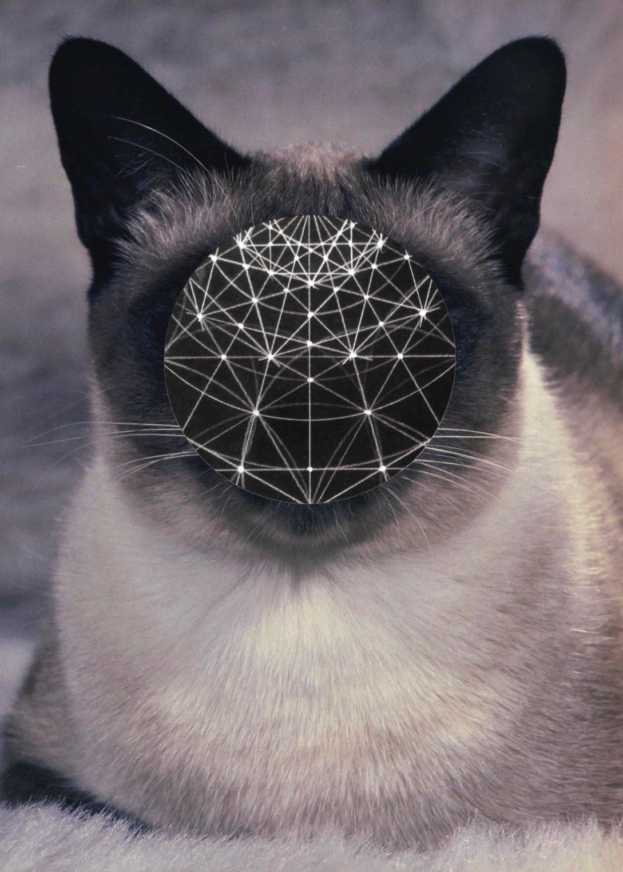 img cat 1001.jpg