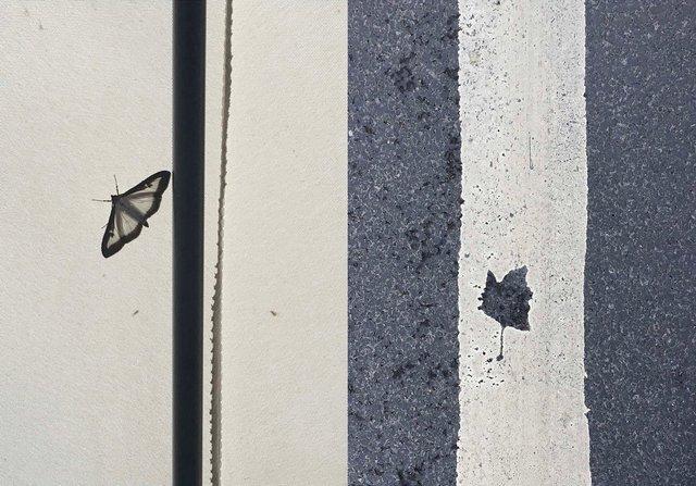 NH grey Flyfall (1).jpg