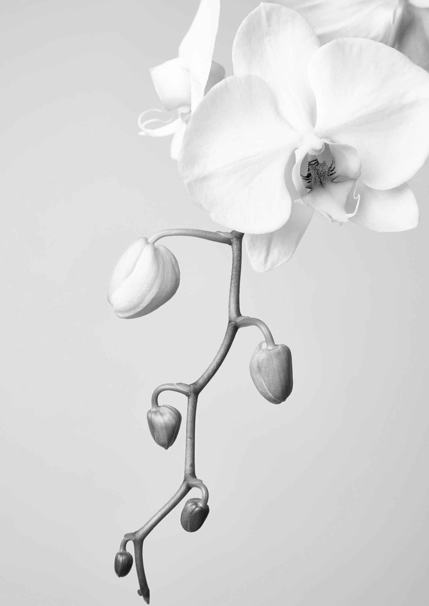 Orchid35.jpg