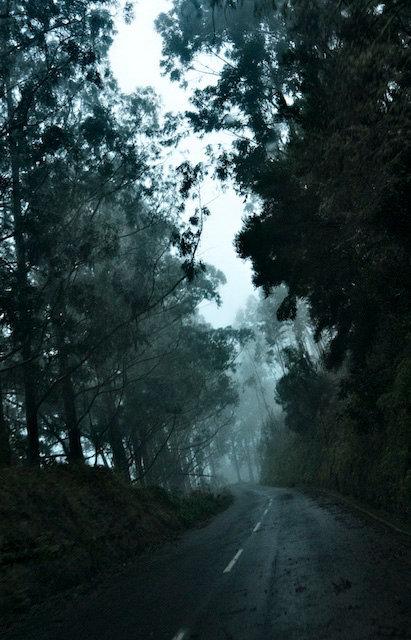 20100106_7982.jpg