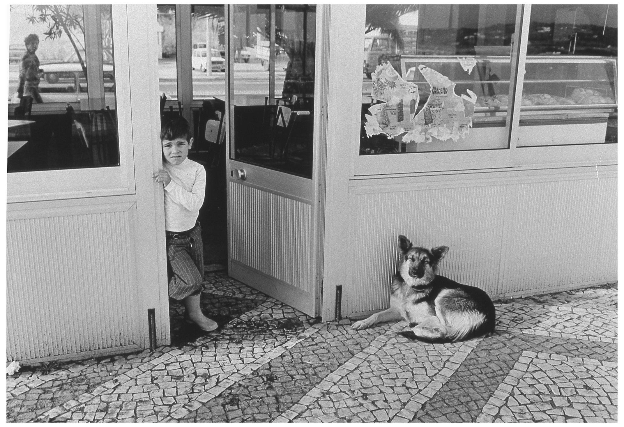 Dog  012.jpg