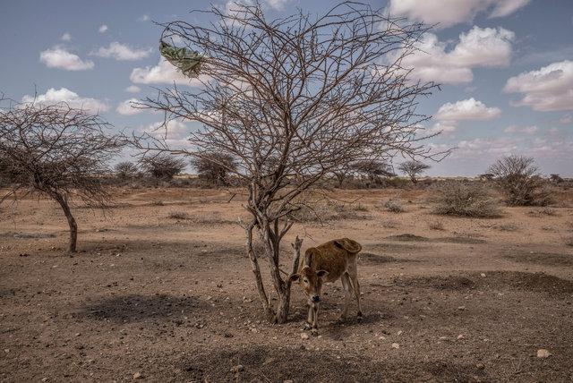 SomaliaDrought_AR08.jpg