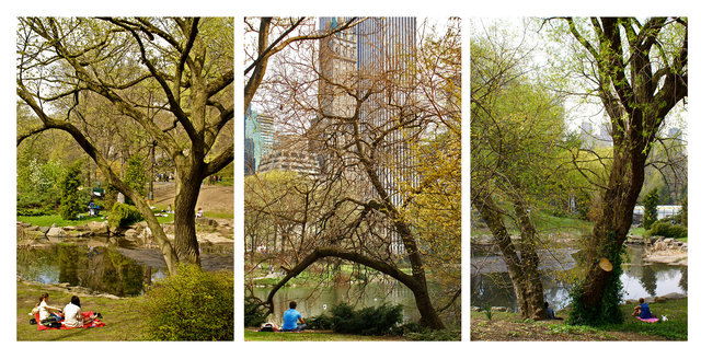 Central Park, 2010