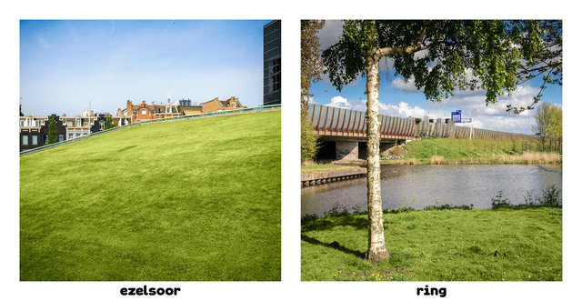 ezelsoor2-ring Amsterdamsedingen Immink-Faber.jpg