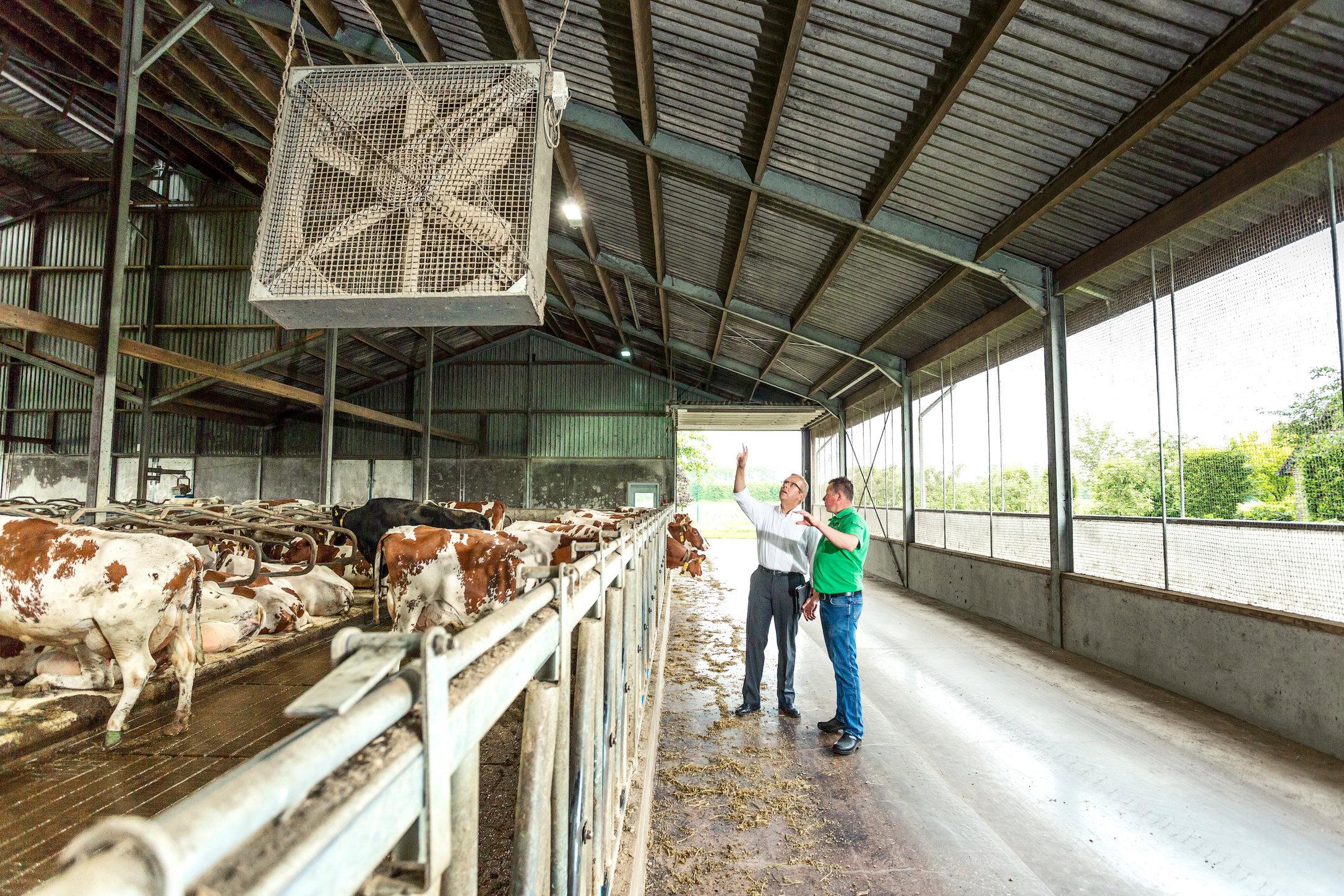 Main Melkveebedrijf Buijs MI_0119-2.jpg