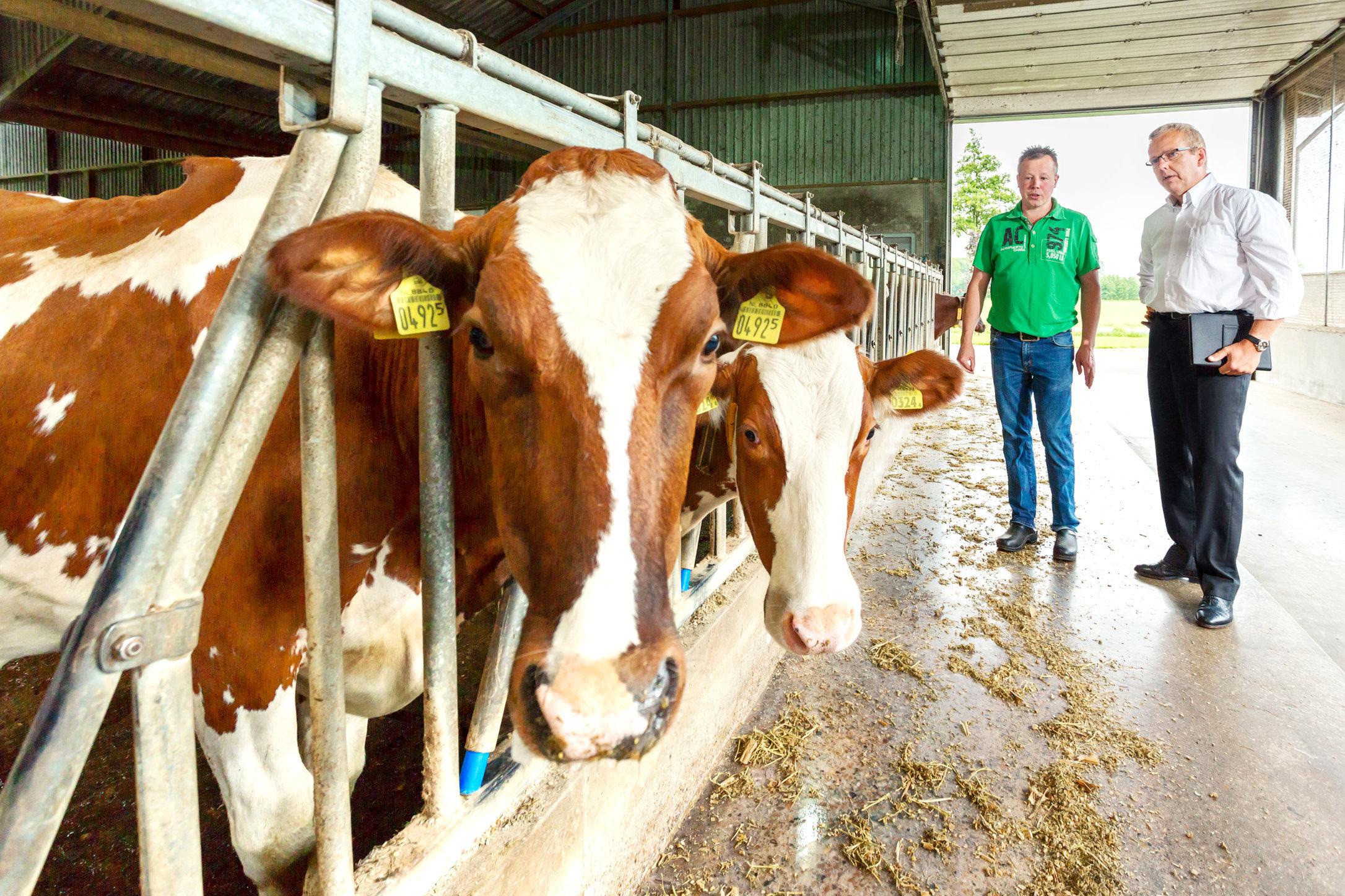 Main Melkveebedrijf Buijs MI_0068-5.jpg