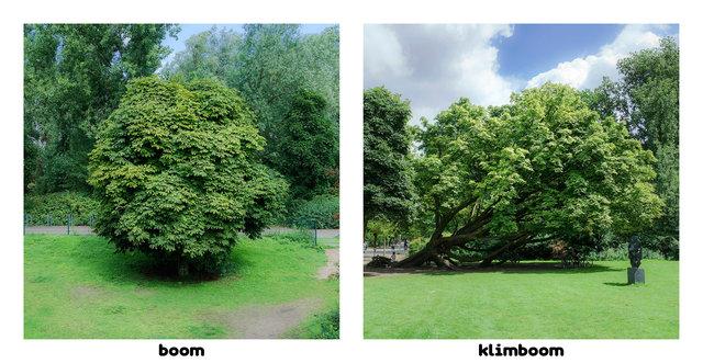 boom-klimboom Amsterdamsedingen Immink-Faber.jpg